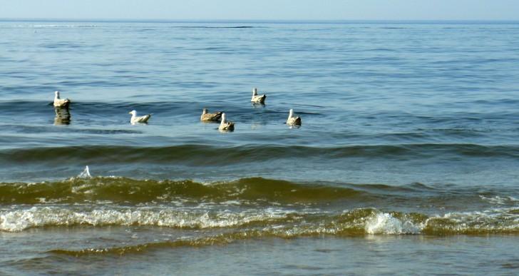 Turystyka a zrzut ścieków bezpośrednio do Morza Bałtyckiego